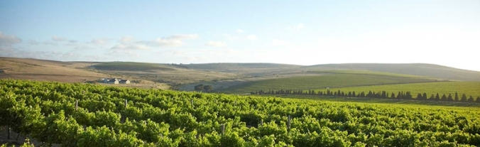 Darling Vineyard