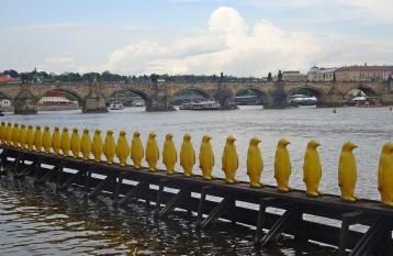 Museum Kampa Penguins
