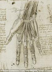 Da Vinci Hand Muscles and Tendons