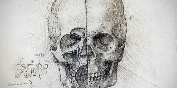 Da Vinci Skull Drawing
