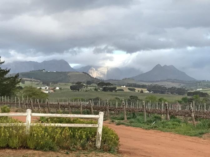 Simonsig Wine Estate Vineyards