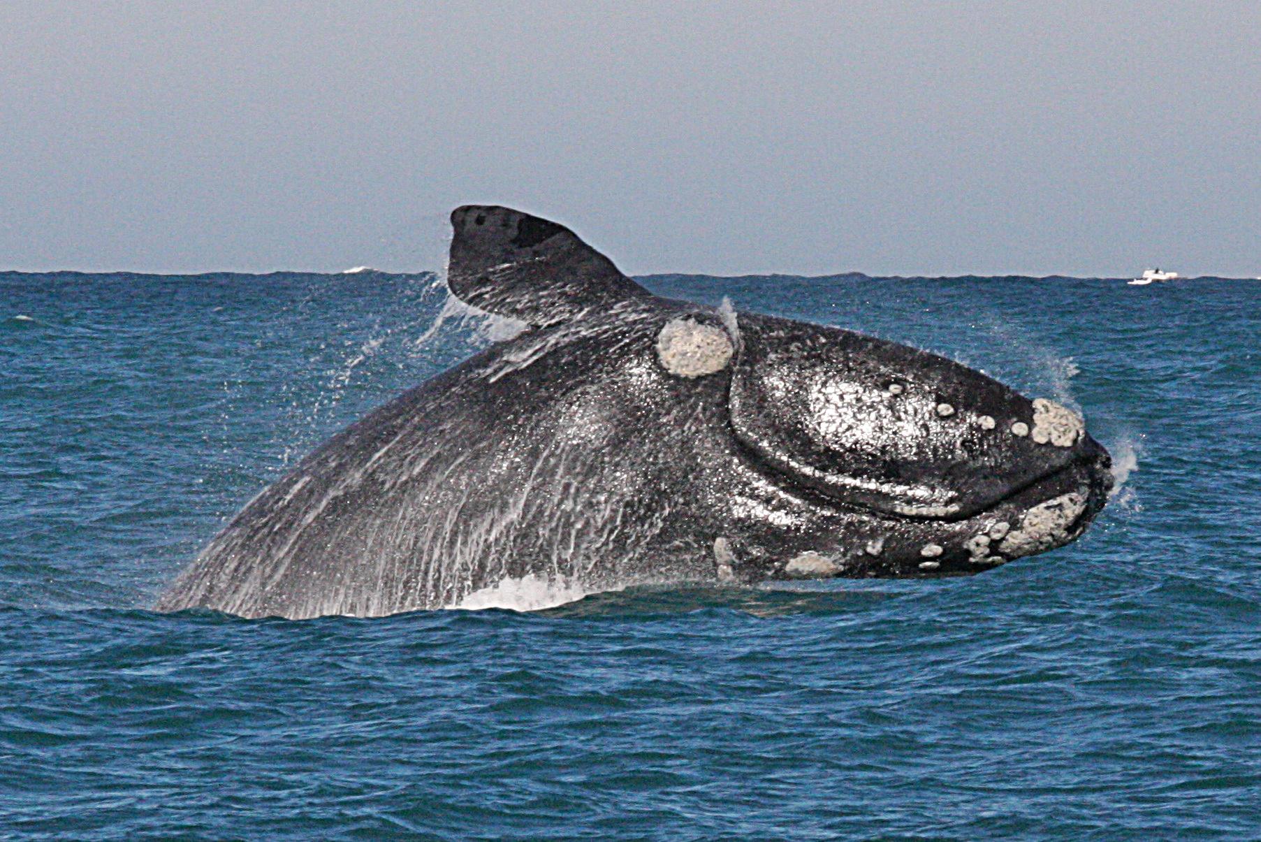 Whale Festival – Celebrating Marine Life