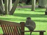 Monkey on a Bench