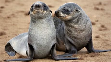 Cape Fur Seals - andbeyond.com