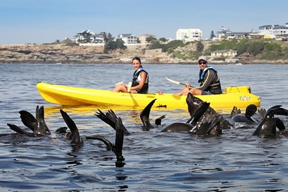 Cape Fur Seals - TripAdvisor