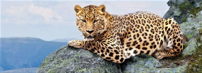 Mountain Leopard - seascapetours.com