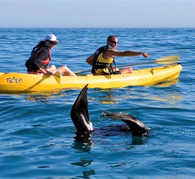 Whale Tails - goto.capetown