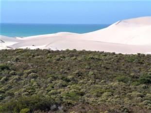 Overberg Beach and Limestone Fynbos - denelotr.co.za