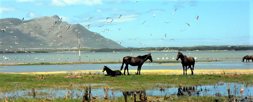 Hermanus Wine and Food Festival + Botriver Wild Horses South Africa