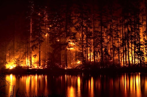 Wildfires, Covid, Elections, and Peaceful Diversions