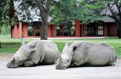 White Rhino at Thula Thula - Cision News