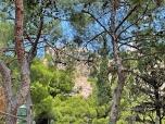 Acropolis through the Trees